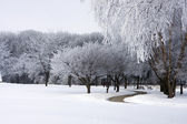 Fresh snow on park trees — Stock Photo