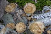 Hromady dřeva — Stock fotografie