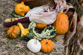 Holiday Gourds and Corn. — Stock Photo