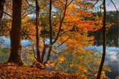 HDR of Trees on a Riverbank. — Stock Photo