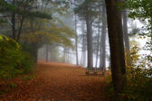 Bench in the Forest Foliage — Stock Photo