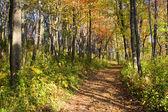 Colorful Autumn Path — Stock Photo