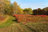 Couleurs d'automne dans la prairie — Photo
