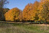 Autumns Golden Colors — Stock Photo