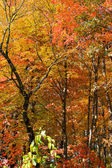 Forest Fall Colors. — Stock Photo