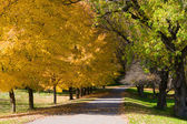 Golden Autumn Tree Colors — Stock Photo