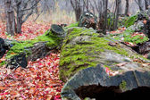 Mossy Log and Autumn Colors — Stock Photo