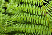 Fern branches — Stock Photo