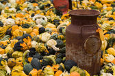 Halloween Gourds and antique milk can — Stock Photo