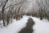 Winter wandelpad. — Stockfoto