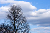 Tree and Clouds — Stock Photo