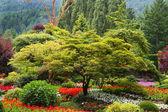 Tree and flower garden — Stock Photo
