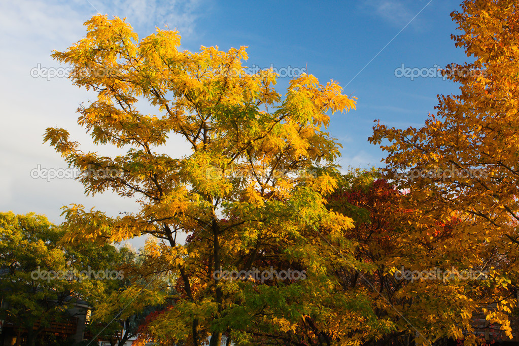 Background image of three trees and blue sky. — Stock Photo #5443764