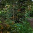 Stock Photo: HDR of a forest path