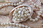 Pearls in a shell — Stock Photo