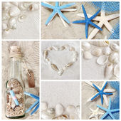 Collage of summer seashells — Stock Photo