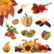 Autumn collection — Stock Photo