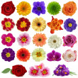 Flower collection - Foto Stock