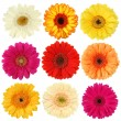 Daisy flower collection — Stock Photo
