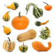 Pumpkin collection — Foto de Stock