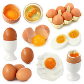Egg collection — Stockfoto