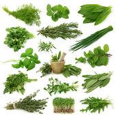 čerstvé bylinky kolekce — Stock fotografie