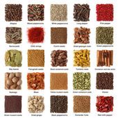 Coleção de especiarias indianas — Foto Stock