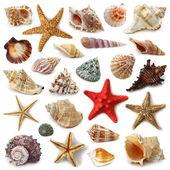 Seashell collection — Stock Photo