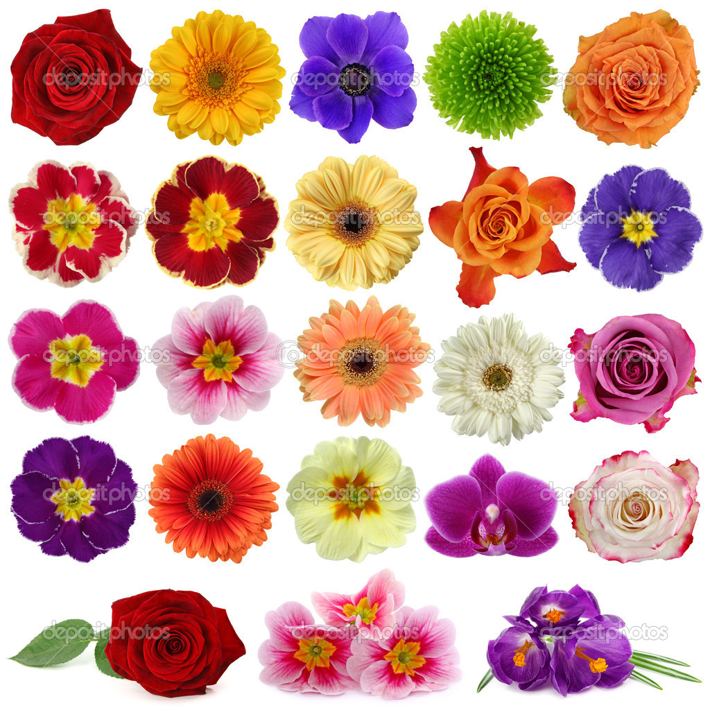 Flower collection isolated on white background  Stock Photo #5451355