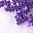 Fresh lavender and bath salt — Stock Photo