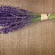 Bunch of dried lavender flowers — Stock Photo