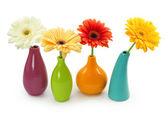 Flowers in vases — Stock Photo