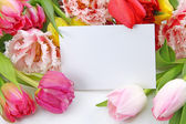 Colorful tulips with blank note — Stock Photo