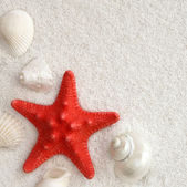White seashells and red seastar — Stock Photo