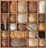 Getreide — Stockfoto
