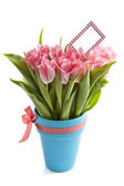 Lovely tulips — Stock Photo