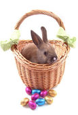 Happy easter — Foto Stock