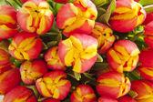 Tulips background — Stock Photo