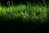 Sunlight meadow — Stock Photo