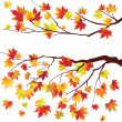 Stock Vector: Autumn maple tree branche