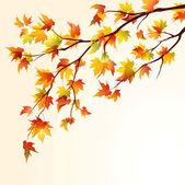 Autumn maple branch — Stock Vector