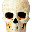 Stock Photo: Skull in fas