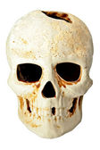 Skull in fas — Stock Photo