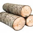 Aspen firewood — Stock Photo