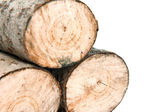 Aspen firewood — Stock Photo