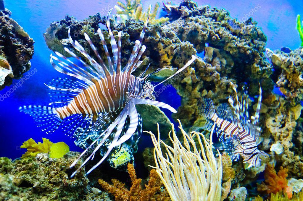 Peces marinos tropicales fotos de stock borissos 6451563 - Peces tropicales fotos ...