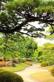 Japon bahçesi — Stok fotoğraf