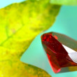 Stock Photo: Ruby and leaves