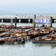 Royalty-Free Stock Photo: Sea Lions, pier 39