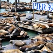 Sea Lions, pier 39 — Stock Photo #5466644